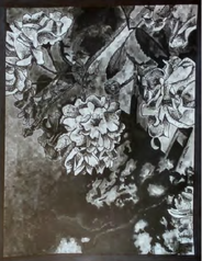 """Pen and Ink Study, 11"""" x 14"""" on Bristol"""