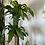 Thumbnail: Happy Plant