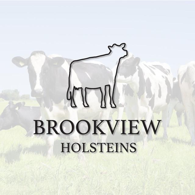 Brrokview Holsteins.jpg