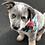 Thumbnail: PET BANDANA - AUSSIE ANIMALS