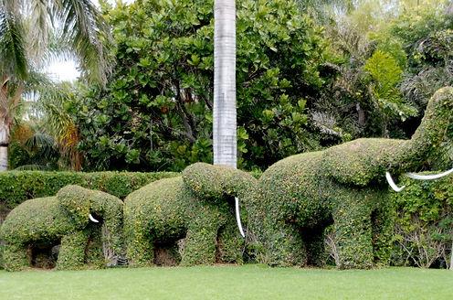 3_elephants_topiary-630x416.jpg