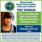 Does carcinogenesis start in the womb? Endocrine disruptors and breast cancer