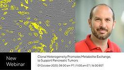How clonal heterogeneity promotes metabolite exchange to support pancreatic tumors