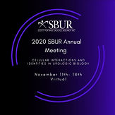 2020 SBUR Annual Meeting - Cellular Interactions and Identities in Urologic Biology
