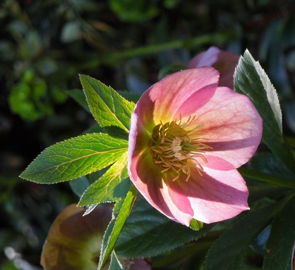 Sunlit Flower