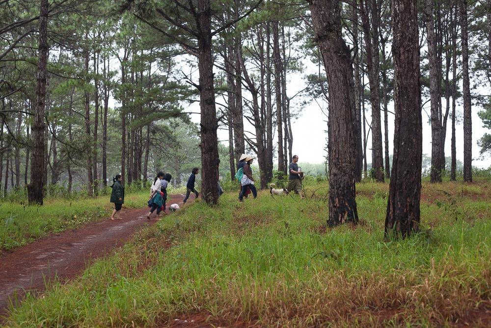 chạm đất, tắm rừng, chữa lành