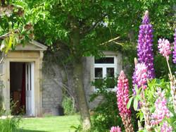 Lupins looking to front door