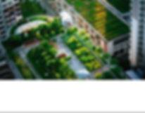 green-roofs-spreading-ny-times copy.jpg