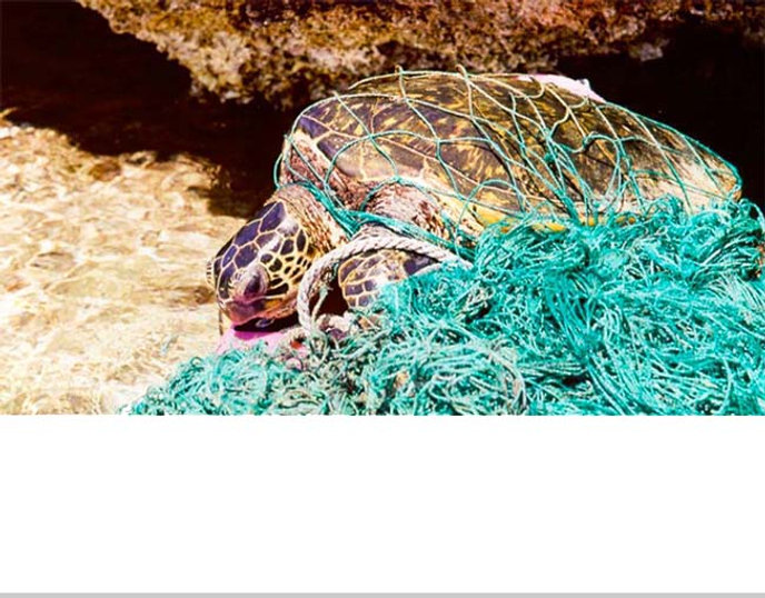 PLASTICS_ARE_KILLING_THE_OCEAN'S_TURTLES