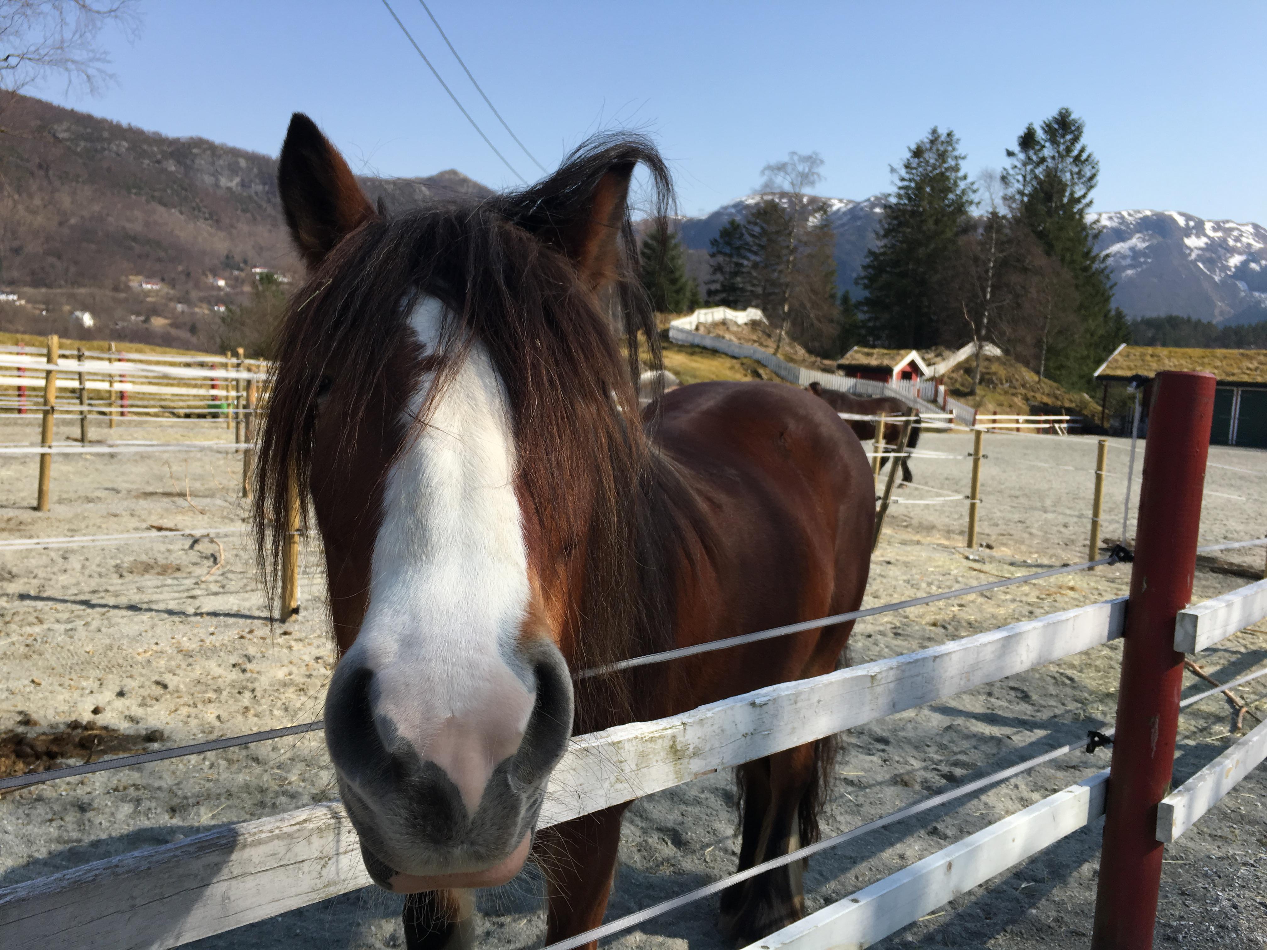 Hest på Øvre-Eide Gård i Bergen
