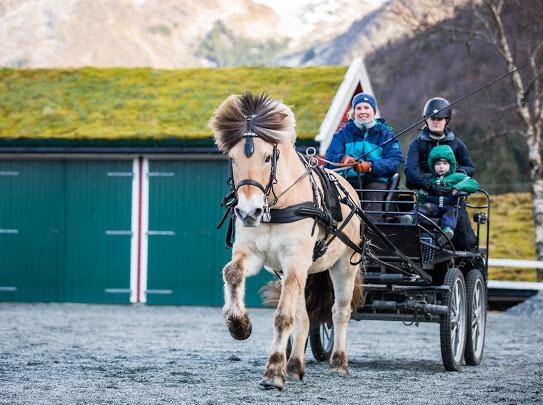 Kjøring med hest og vogn i Bergen