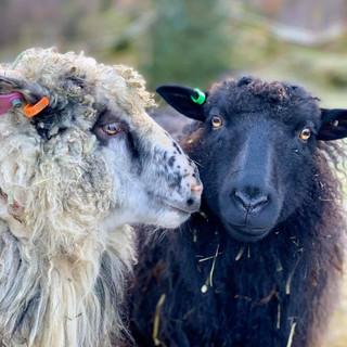 Øvre-Eide Gård i Bergen tilbyr rideturer og gårdsbesøk