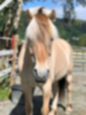 Hest og riding i Bergen