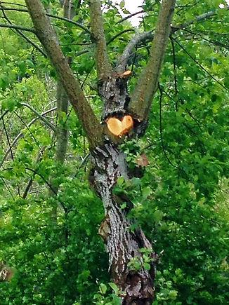 Baum_korrigiert.jpg