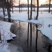 Trees and snow in Estonia