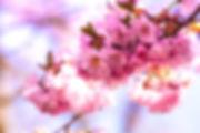 mona-eendra-97763-unsplash.jpg