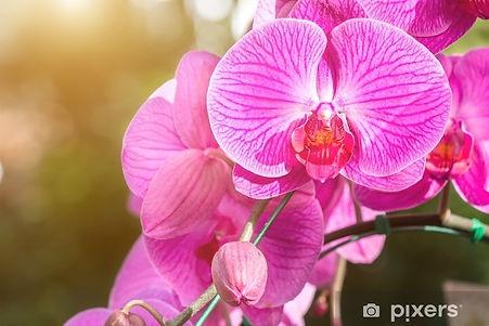 stickers-fleur-d-39-orchidee-dans-le-jar
