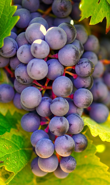 grapes-4478720_640