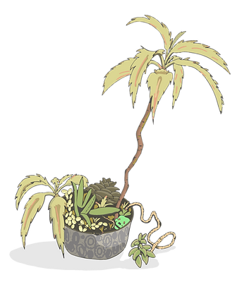 PlantLifeTwo.png