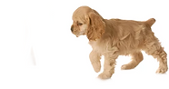 dog.fw.png