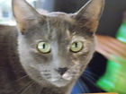 cat home care by Concierge, litter change, grooming cat sitters, cat boarding