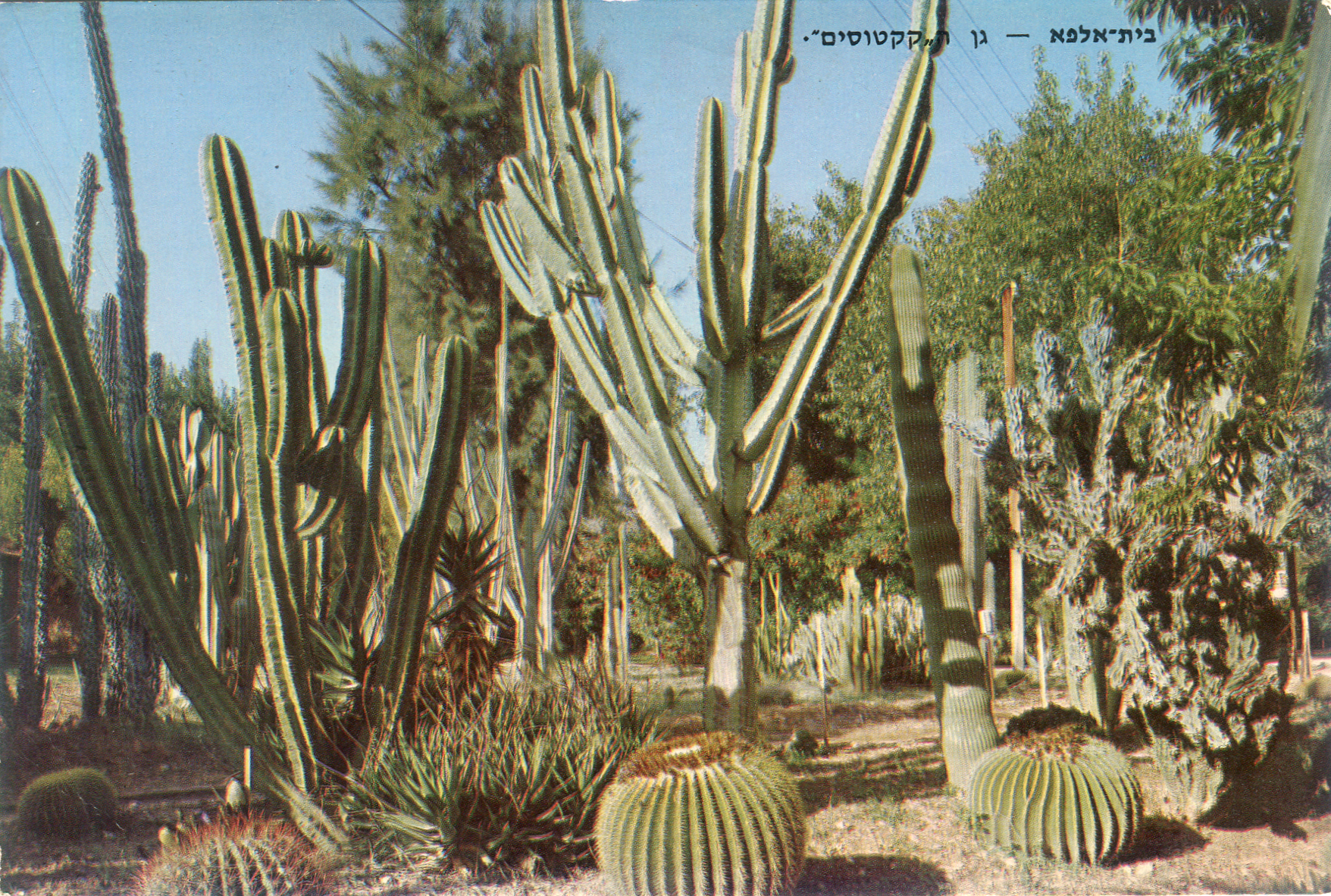 Beit Alfa- Cactus garden