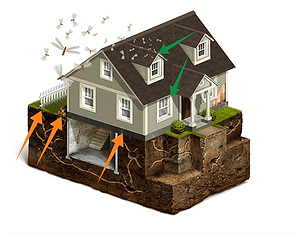 how-do-termites-get-in-house.png
