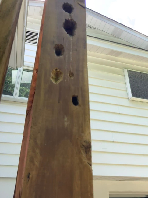 Damage from Carpenter Bees