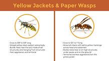 Wasp-Diagram.jpg