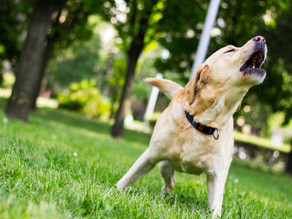 Why dogs bark (and should we stop them?)