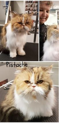 Pistache - Sylvie.jpg
