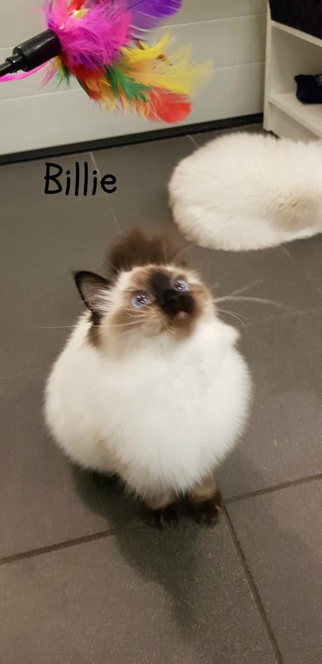 Billie - Anneleen.jpg