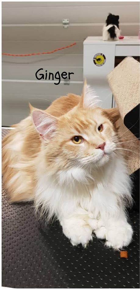 Ginger - Katrien.png