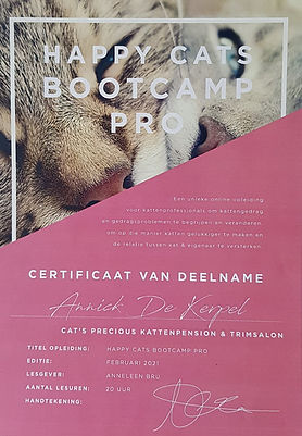 Happy Bootscamp Pro.jpg