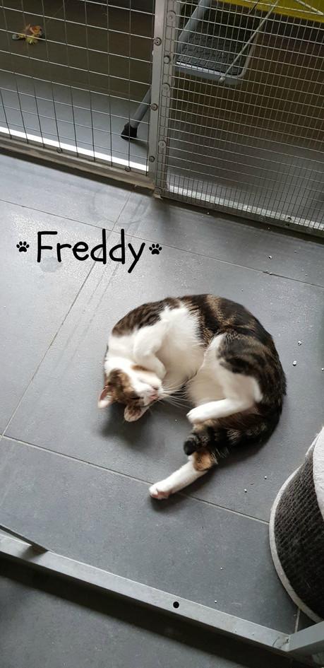 Freddy - Jolien.jpg