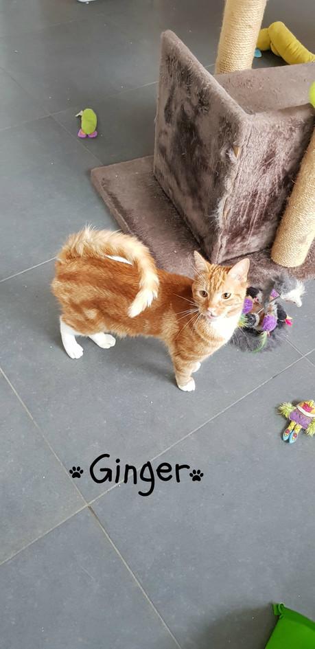 Ginger - Liske.jpg