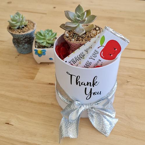 Succulent Teacher Gift Box