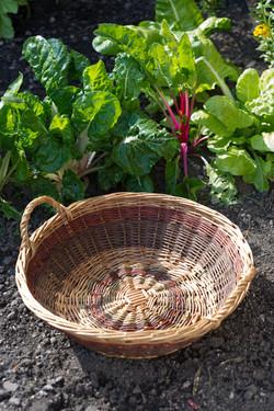 Harvesting Basket