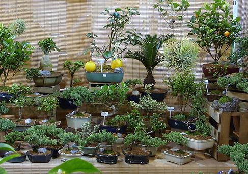 bonsai_varieties.JPG
