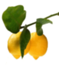 limon_edited.jpg