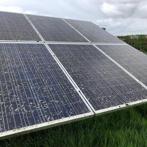 Lichen solar farm cleaning