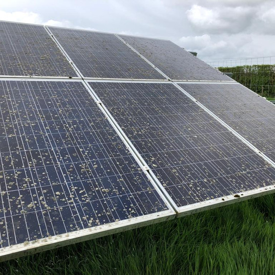 Lichen solar farm cleaning