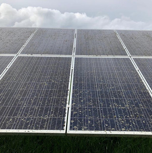 lichen removal solar farm