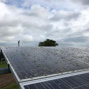 Lichen on solar panel