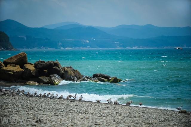 ДСОЛ Морская Волна