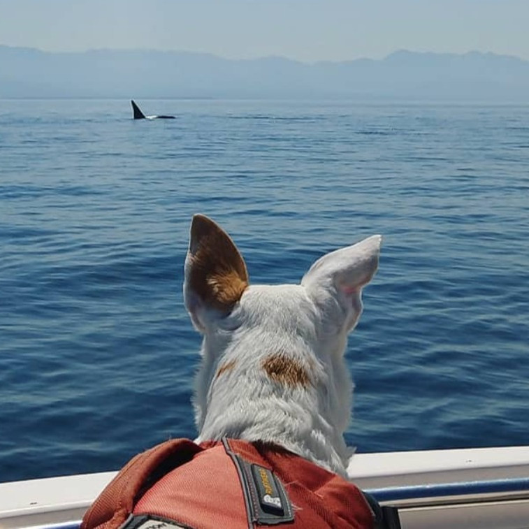Catching Up With Conservation Canines