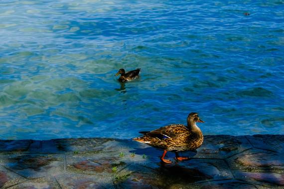 Lake Balaton Weddings7.JPG