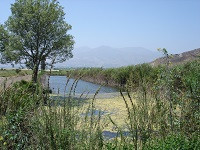 RJER Pond