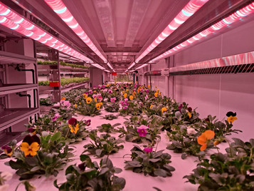 A New Way to Determine Lighting Costs At Your Greenhouse