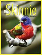 Skinnie_cover_1916.jpg